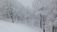大雪により各地でパウダー祭り!その様子。